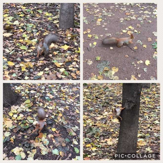 Red squirrel in Moscow